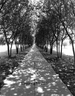 Tree Arched Path - Louisiana State University, Shreveport, LA
