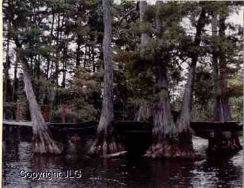 Cypress Bridge - Caddo Lake, Oil City, LA